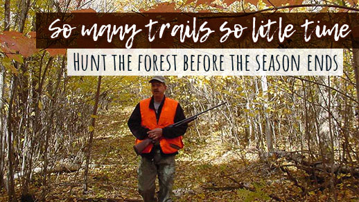 Hunt on the forest for some great opportunities at wild game.