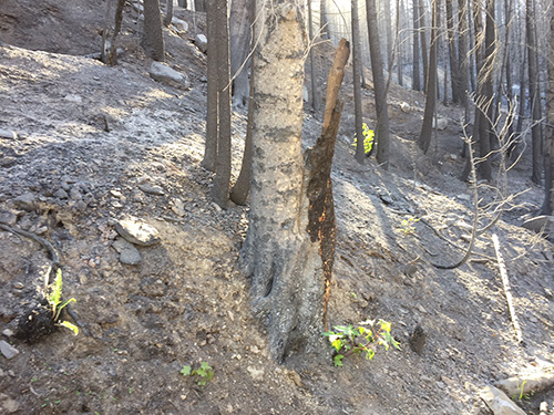 New growth sprouts up in Ranch Fire area