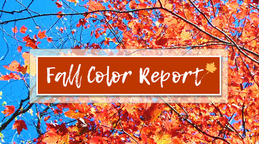 Text says Fall Color Report over an image of red and yellow leaves against a blue sky.