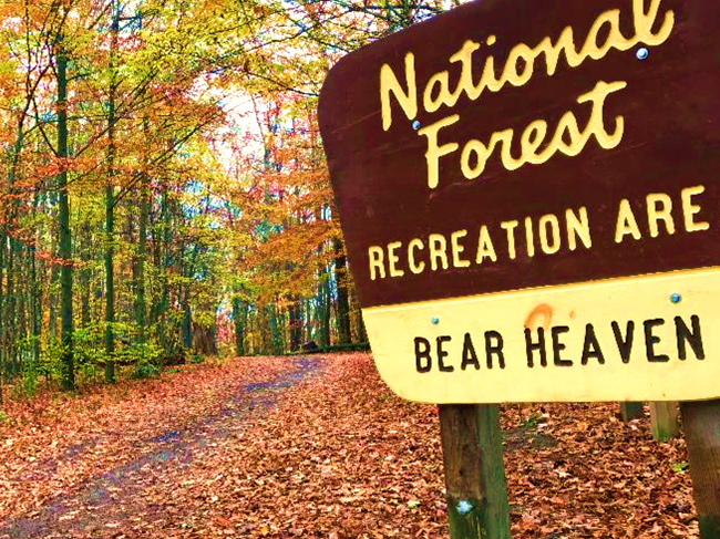 A sign for Bear Heaven Rec Area along a golden orange road of fall leaves.