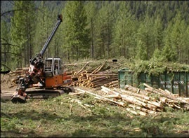 Sorting wood biomass