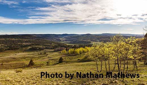 Scenic View by Nathan Mathews