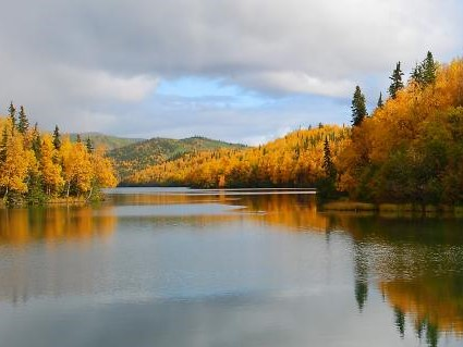 forest trees showing fall colors near a lake