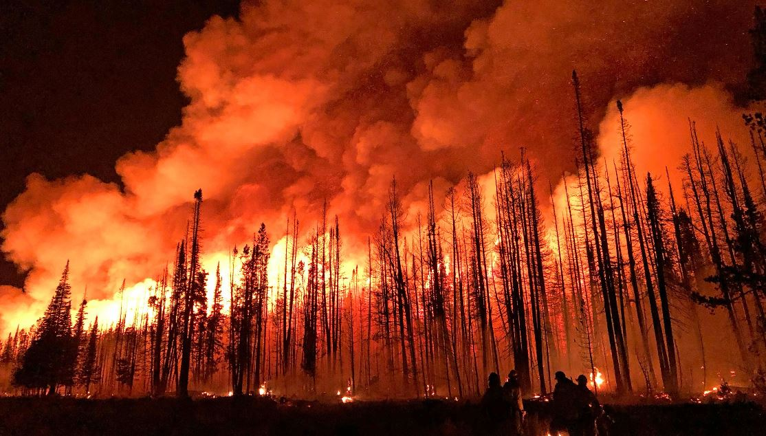 Image of the Roosevelt Fire at night showing flames coming off the treetops and firefighters