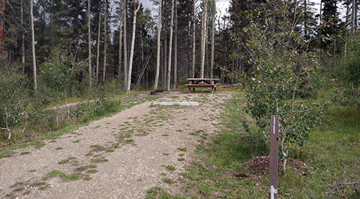 Campsite with picnic table at end of tree lined two track road
