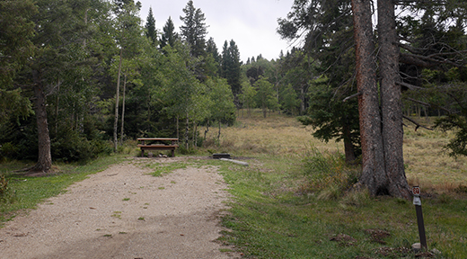 Campsite with picnic table at end of two track road with trees on left and meadow on right