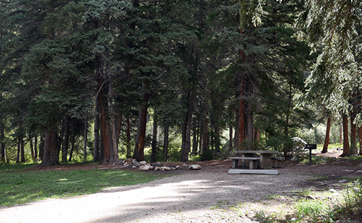 Campsite at the edge of the evergreens with picnic table, fire grill