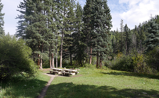 Campsite in the sun with trees surrounding distant and left side, picnic table at end of trail