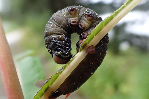 a worm curled around a plant.