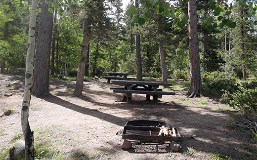 View of two campsites in the trees near each other, each has a picnic table and metal fire ring
