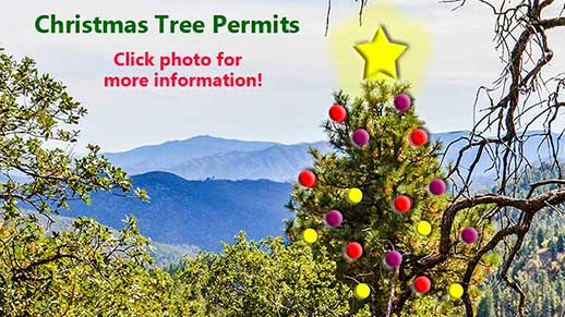 Christmas tree permits on sale November 17. Click image to learn more.