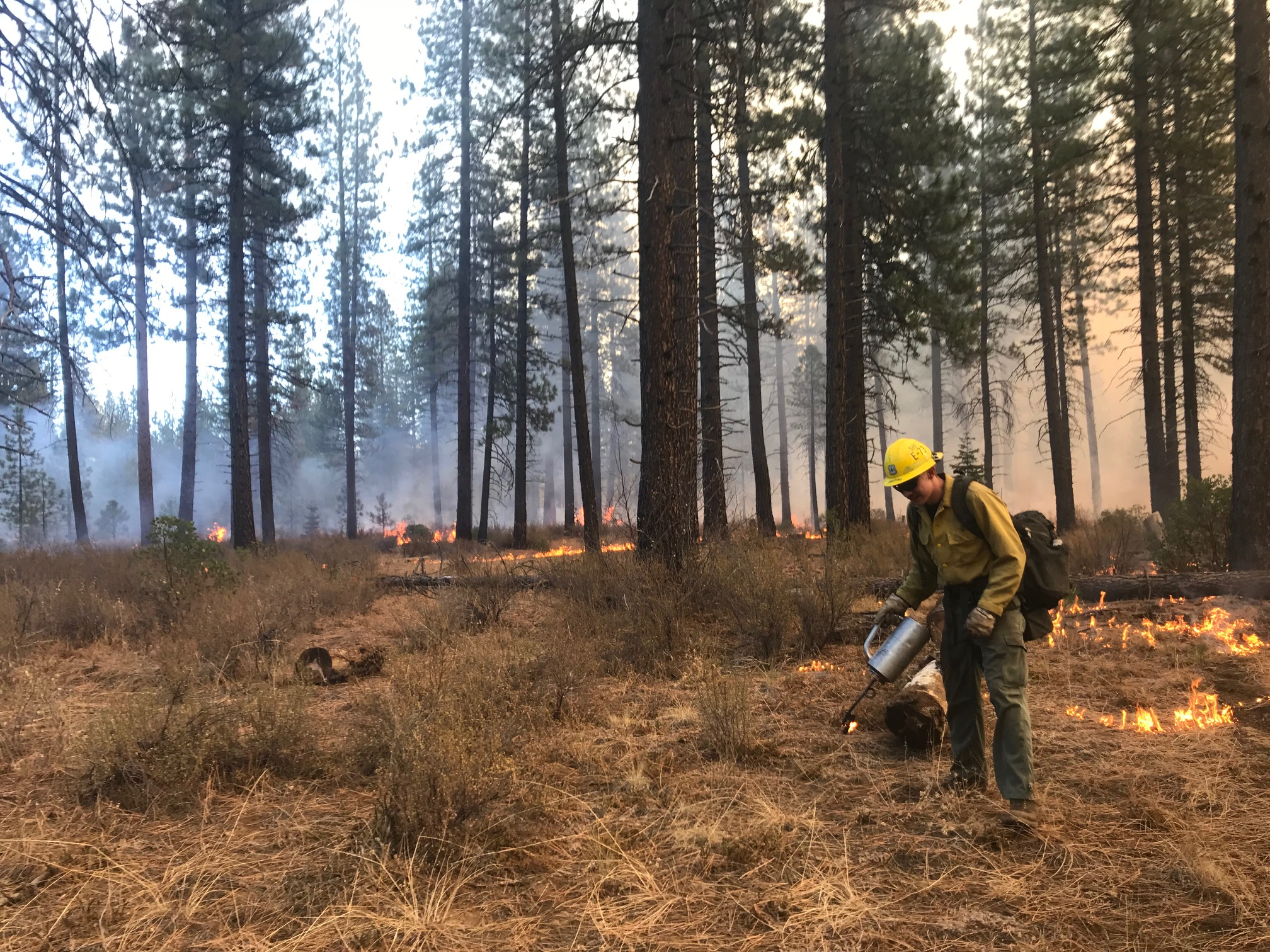 Firefighter working with a drip torch on the Harris Prescribed Fire October 12, 2018