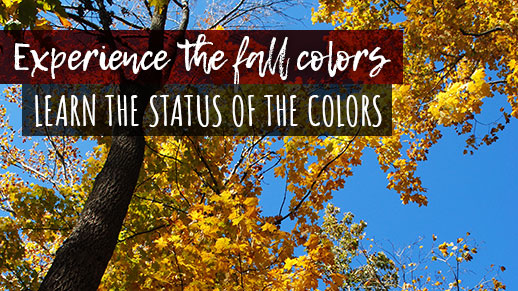 Check the status of the fall colors on the forest.