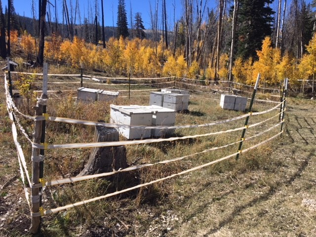 Bee hives in research enclosure on forest.