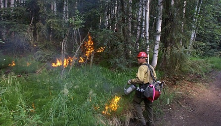 Prescribed Burn Photo