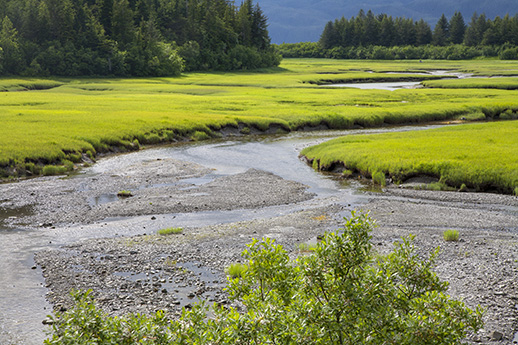 A view of the Copper River Delta in summer.