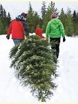 Christmas Tree Cutters
