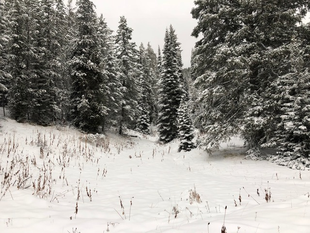 Snow on ground in Teton Basin