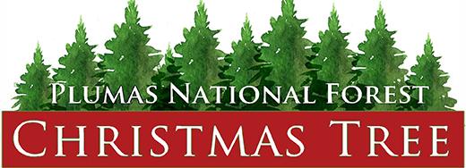 Plumas National Forest Christmas Tree Permits 2020 Plumas National Forest   Forest Products Permits