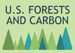 View an infographic connecting the Forests and carbon