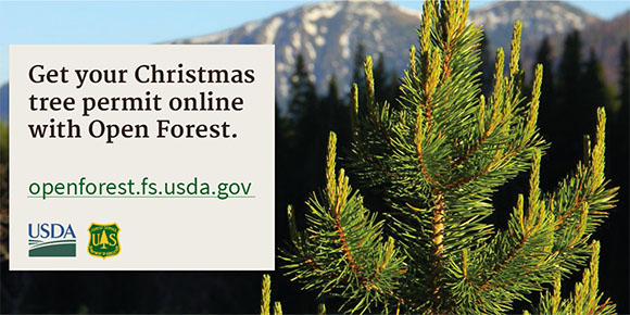 Image of the first screen for the Open Forests Christmas Tree Pilot