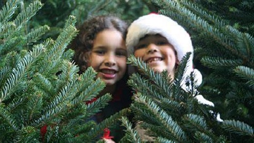 Two kids peek out from behind a cut tree.
