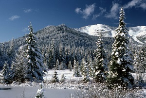 A snow covered scene with trees and a meadow