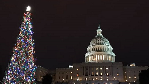 Capitol Christmas Tree lit up at night outside the Capitol Building.