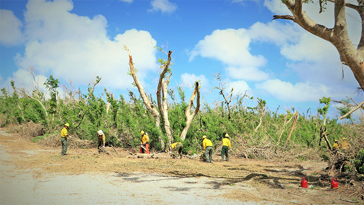 Incident responders work together with the Saipan Crew 36 to remove hazardous trees.