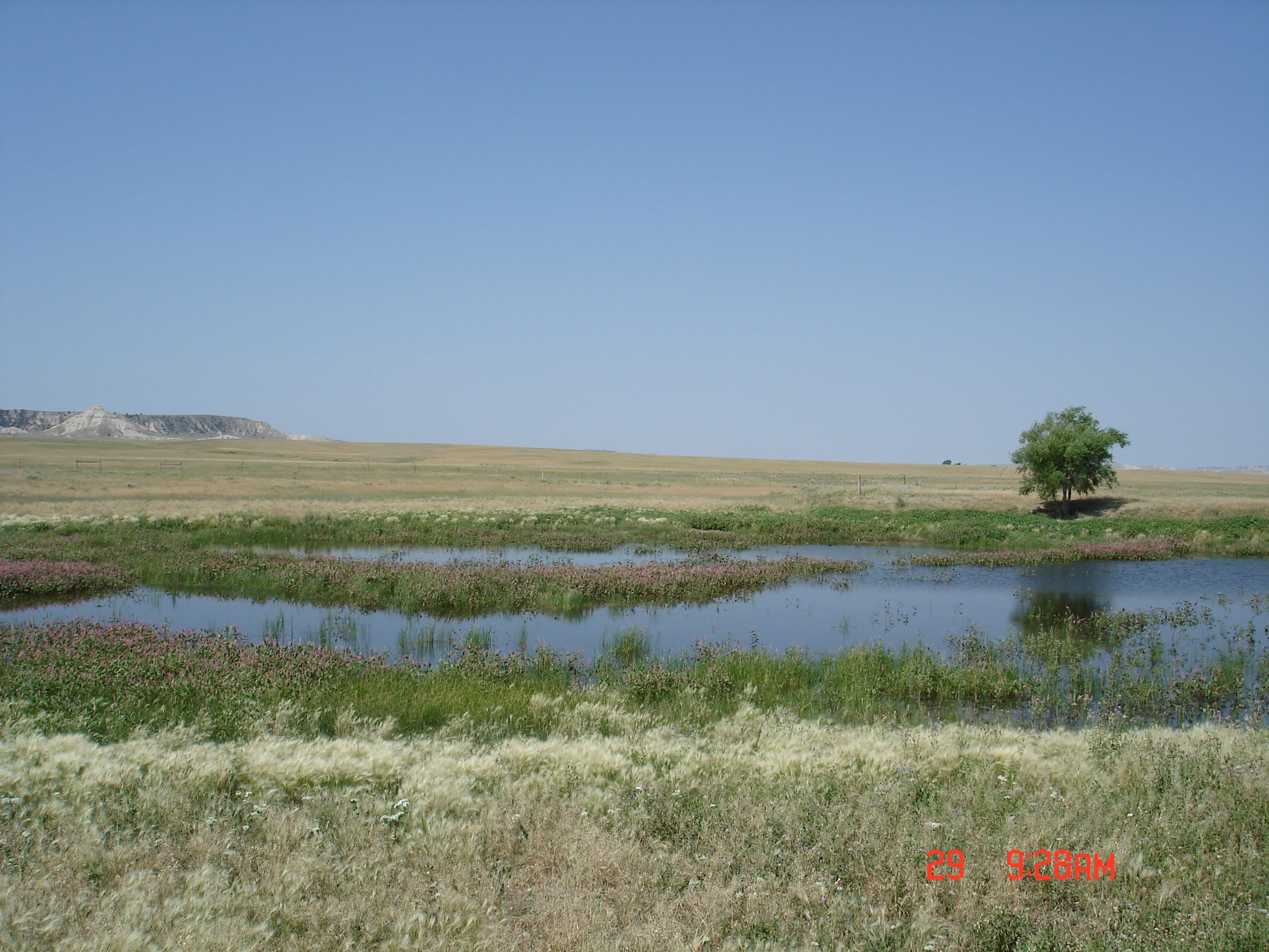 A wetland area at Oglala National Grassland