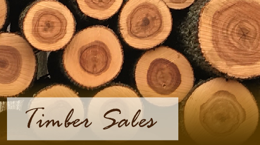 Find a timber sale