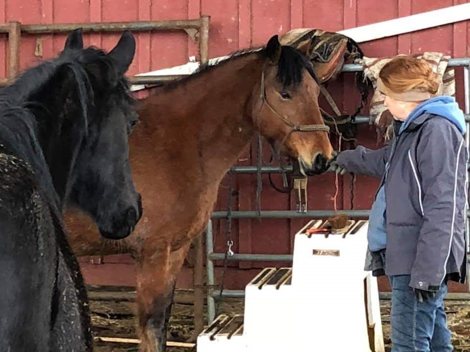 Lady standing in a pen with two horses, she is petting one of the horses.