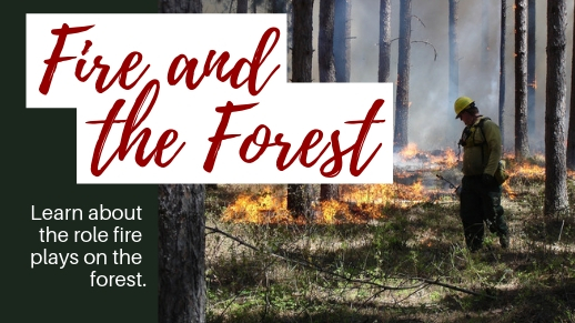 Learn the role fire plays on the forest.