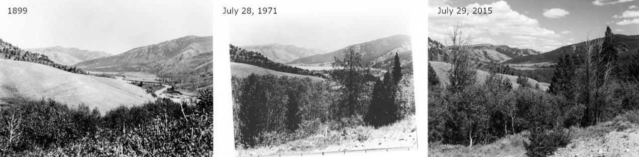 Gros Ventre Valley from Turpn Hill in 1899, 1971, and 2015 comparing vegetation growth over time.
