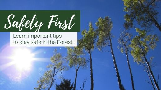 Get tips for being safe on the forest.