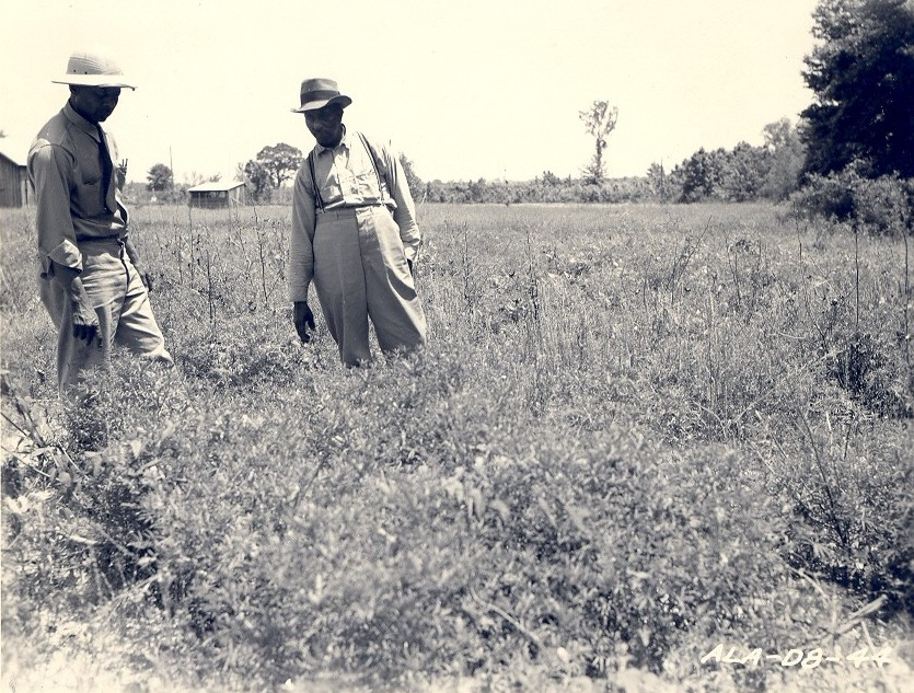 Districts: History - Tuskegee NF Photo 6