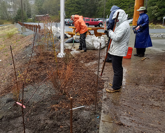 Sitka employees with rain coats begin spreading mulch