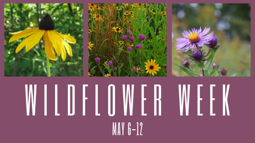 wildflower week.