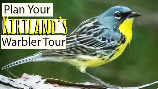 Kirtland's Warbler Tours