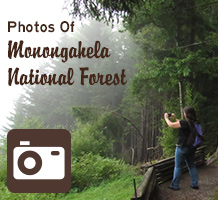 A woman takes a photo at an overlook. Text reads Photos of Monongahela National Forest.