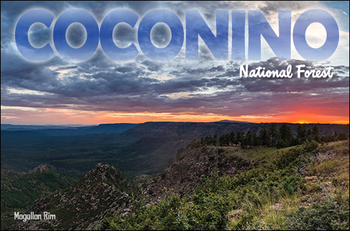 Coconino National Forest - Home