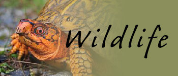 Quick Link: Wildlife