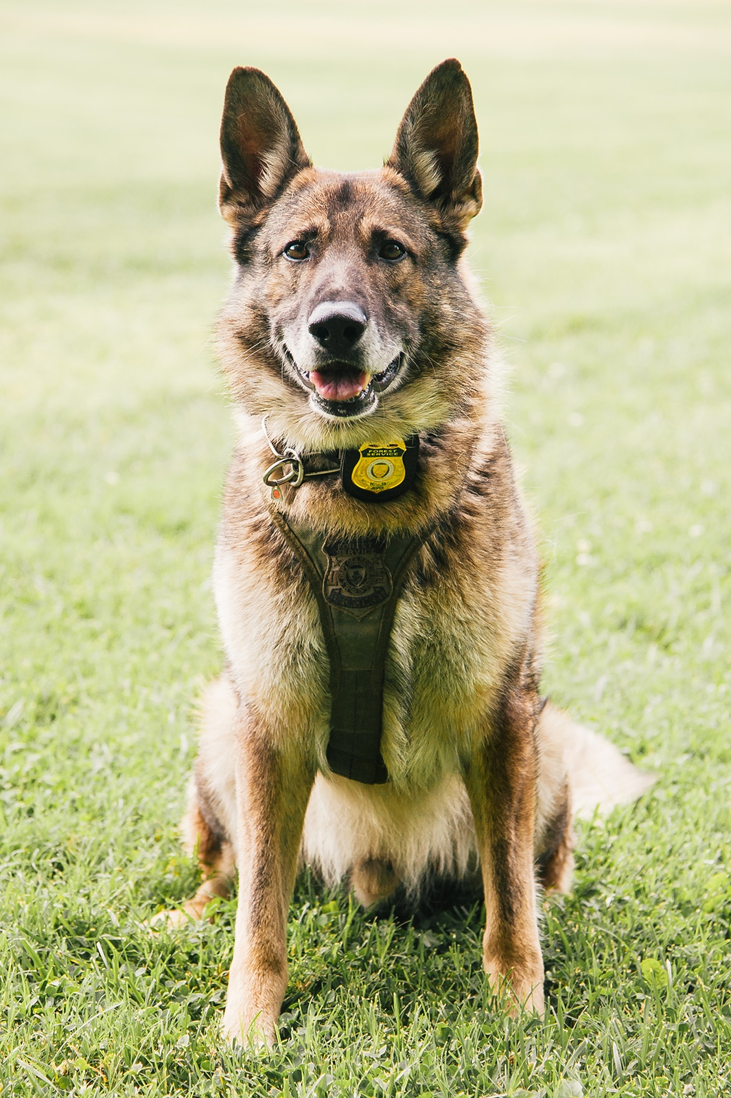 US Forest Service K9 Jasper has worked with the forest for nine years.