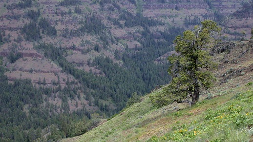 Umatilla National Forest - Home