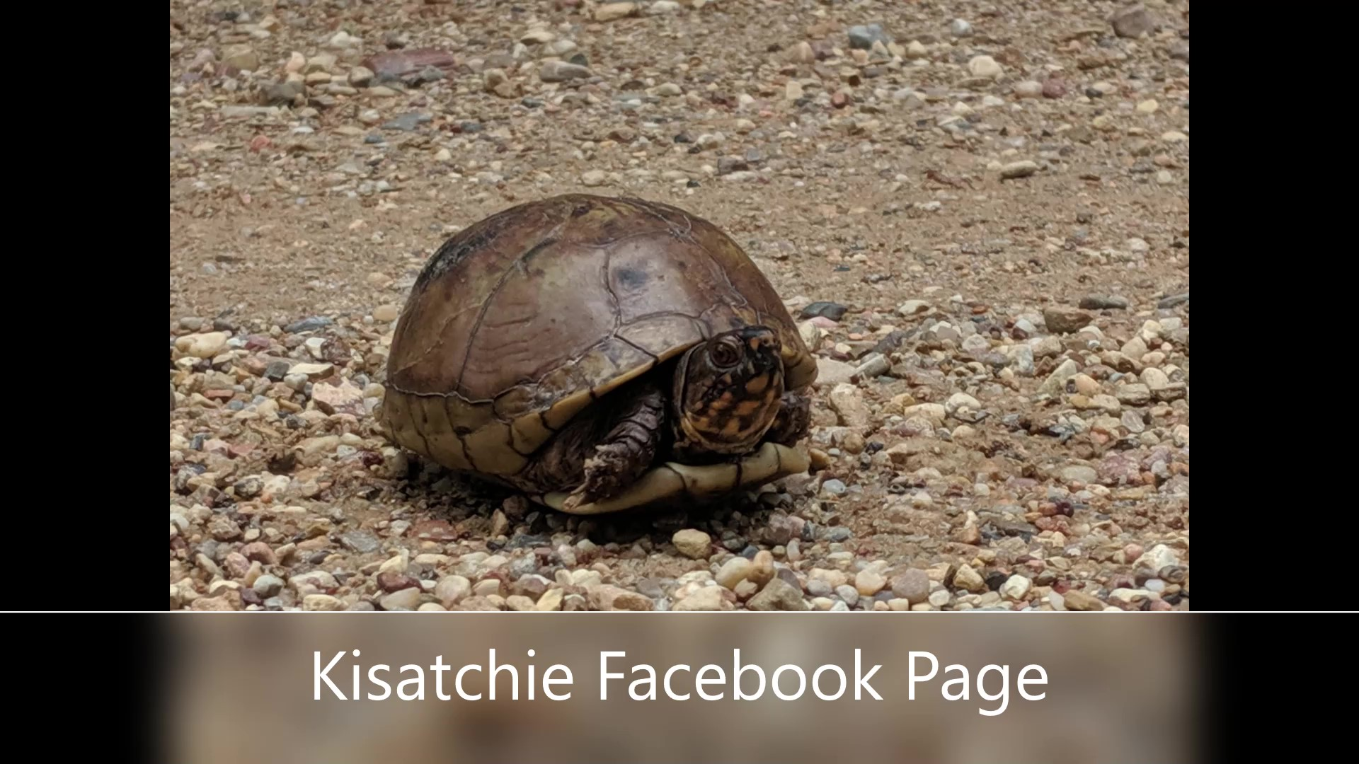 Photo of small tortoise