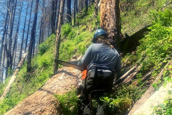 A trail crew member on a trail about to cut a log with a chainsaw..