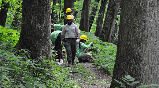 A team of employees work to clear invasive plants along a trail.