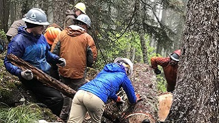 A team of people push a log off a trail