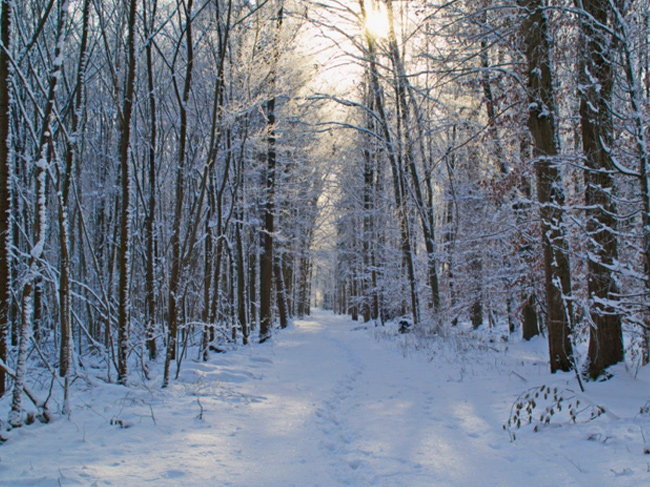 A snowy wide path leads through hardwood forest.