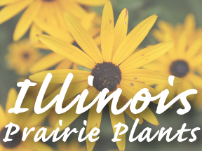 Quick Link: Illinois Prairie Plants